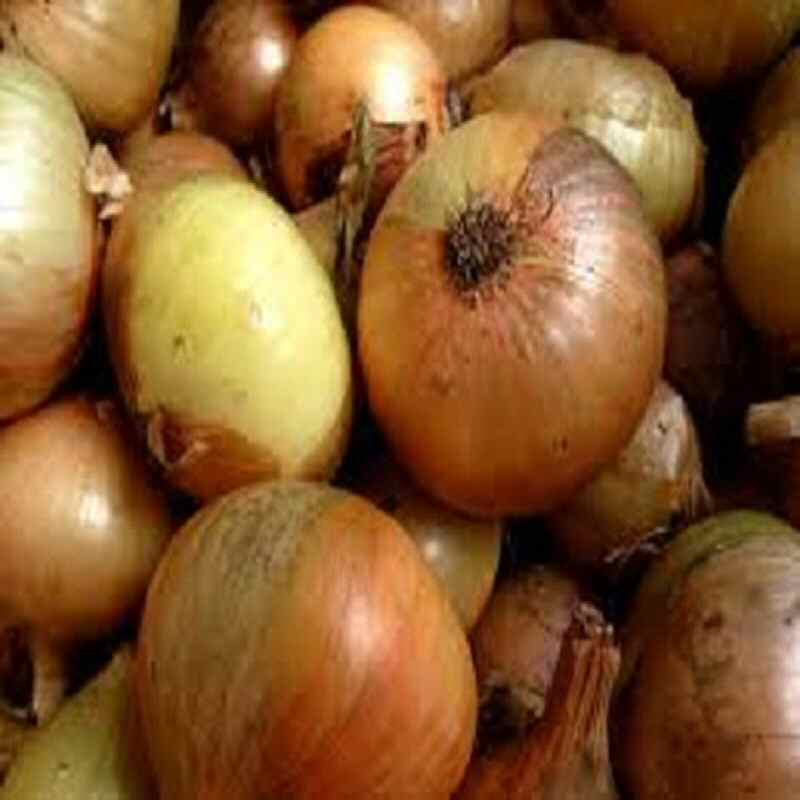 Onions UK new crop 500g