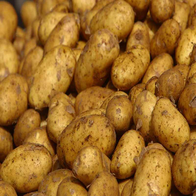 Potatoes uk new crop 1.5 kg