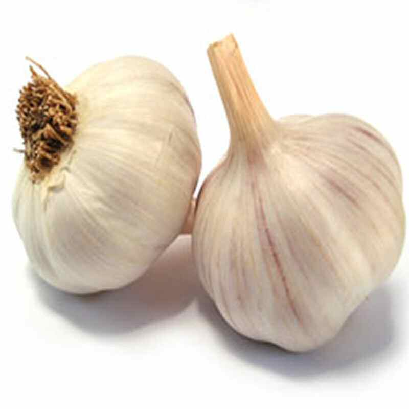 Garlic Bulb  purple £10.00 per kg